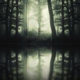 Donkere geheimzinnige bosbezinning stock afbeelding