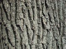 Donkere gekleurde boomschors met sporen van mos Stock Afbeelding