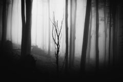 Donkere griezelige Halloween-scène stock afbeeldingen