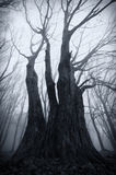 Donkere griezelige reuzeboom op Halloween Stock Afbeelding