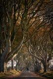 Donkere Hagen, Noord-Ierland Stock Fotografie