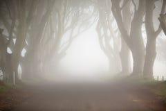 Donkere Hagen, Noord-Ierland, de lijnaandrijving van de mysticusboom en mist stock fotografie