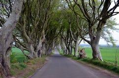 Donkere Hagenrek van de bomen van de wegbeuk Stock Fotografie