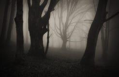 Donkere Halloween-scène in bos met geheimzinnige mist Stock Afbeeldingen