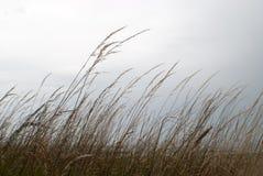 Donkere hemel achter droog gras Royalty-vrije Stock Afbeelding