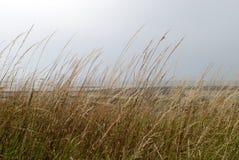 Donkere hemel achter droog gras Royalty-vrije Stock Foto's