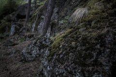 Donkere keien die in mos in het hout met bomen worden behandeld die groeien stock afbeelding