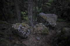 Donkere massieve die keien in mos in het hout tegen stormachtige hemel met boomboomstam worden behandeld royalty-vrije stock fotografie