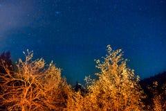 Donkere nachthemel boven de herfstbos Royalty-vrije Stock Foto