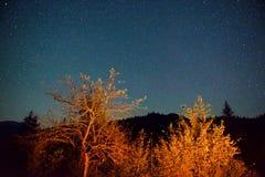 Donkere nachthemel boven de herfstbos Stock Fotografie
