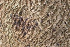Donkere Pissebedden Woodlouse op Grey Tree Bark met Groen Mos stock foto