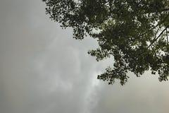 Donkere regenwolken die zich boven bomen vormen stock foto