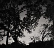 Donkere romantische nacht in het hout stock afbeelding