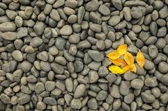 Donkere rotsen en kiezelstenen met gele dalingsbladeren Stock Foto's