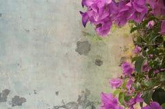 Donkere roze bougainvilleabloemen tegen concrete muur stock fotografie