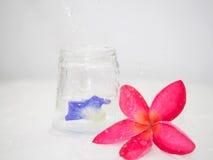 Donkere roze die frangipanibloem naast een glas van waterbovenkant wordt geplaatst - neer en de erwt bloeit binnen het glas Ondui Royalty-vrije Stock Foto