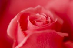 Donkere roze nam toe stock fotografie