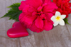 Donkere roze rozen met harten en markering Stock Foto