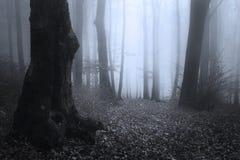 Donkere silhouetbomen in blauw mistig bos stock fotografie