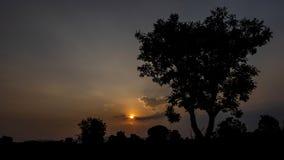 Donkere silhouetten van bomen en verbazende bewolkte hemel op zonsondergang in schemeringtijd stock afbeelding