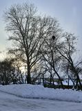 Donkere silhouetten van bomen tegen de hemel van de de winteravond Stock Afbeelding