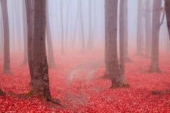 Donkere sleeptrog een de herfstbos met mist stock foto