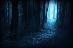 Donkere slepen in een mistige dag in het bos tijdens de herfst Stock Fotografie