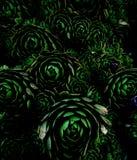Donkere stijlflora Stock Afbeelding