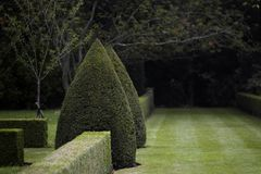 Donkere Topiary Tuin Stock Afbeelding