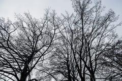 Donkere uitstekende achtergrond met zwarte bomen zonder bladeren De Achtergrond van Grunge van de kunst Royalty-vrije Stock Afbeelding