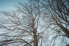 Donkere uitstekende achtergrond met zwarte bomen zonder bladeren De Achtergrond van Grunge van de kunst Royalty-vrije Stock Fotografie
