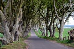 Donkere van de de bomenaard van de Hagenbeuk het landschapsfotografie Royalty-vrije Stock Fotografie