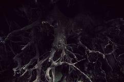 Donkere verdraaide wortels in eng bos stock afbeeldingen