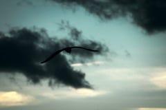 Donkere vogel in donkere wolken royalty-vrije stock foto's