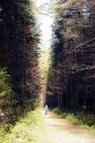 Donkere vuilweg door het de herfstbos stock fotografie