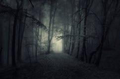 Donkere weg in achtervolgd hout bij nacht royalty-vrije stock afbeelding