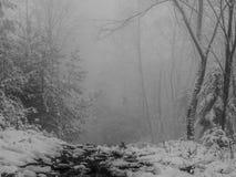Donkere weg in een nevelig bos stock fotografie
