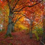Donkere weg in het hout van de herfstbergen Royalty-vrije Stock Fotografie