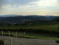 Donkere Wijngaard bij Zonsondergang Stock Foto