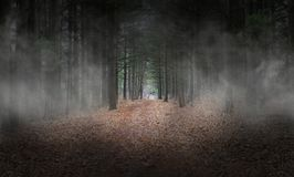 Donkere Wods, Bos, Mist, Surreal Achtergrond, stock foto's