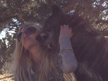 Donkere wolfsminnaar Royalty-vrije Stock Afbeeldingen