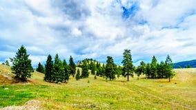 Donkere Wolken die over Lodgepole-Pijnboombomen BC hangen op de rollende heuvels in een droog gebied van Okanagen langs Weg 5A i9 royalty-vrije stock foto's