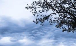 Donkere wolken met boom Royalty-vrije Stock Afbeelding