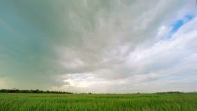 Donkere Wolken over een Groen Tarwegebied stock videobeelden