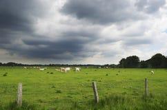 Donkere wolken over het weiland Stock Afbeeldingen