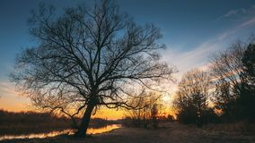 Donkere zwarte silhouetten van bomen zonder bladeren op een achtergrond van de mooie trillende vroege hemel van de de lentezonson stock video