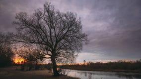 Donkere zwarte silhouetten van bomen zonder bladeren op een achtergrond van de mooie trillende vroege hemel van de de lentezonsop stock videobeelden