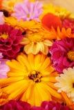 Donkergele calendula onder heldere mengeling van bloemen stock afbeelding