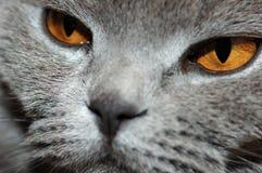 Donkergele ogen Stock Foto's