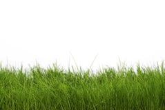 Donkergroen gras royalty-vrije stock afbeelding